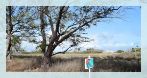 Ragged Point Lot 10